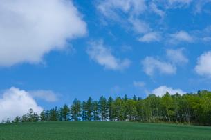 青空と新緑の木立の写真素材 [FYI02028775]
