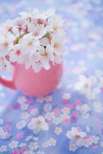 桜の花と食器のアレンジメントの写真素材 [FYI02028776]