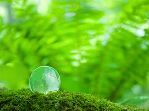 エコロジーイメージ 森林に緑の地球の写真素材 [FYI02028779]