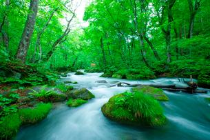 新緑の渓流の写真素材 [FYI02028784]
