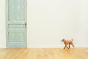 犬とリビングルームの合成向け背景素材の写真素材 [FYI02029187]