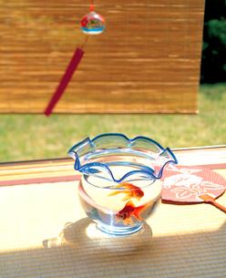 縁側の金魚鉢と風鈴の写真素材 [FYI02029556]