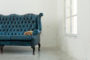 犬と海外風のリビングルームの合成向け背景素材の写真素材 [FYI02029619]