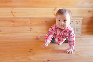木の床でハイハイする赤ちゃんの写真素材 [FYI02029801]