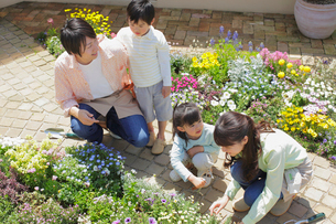 ガーデニングをする4人家族の写真素材 [FYI02030021]