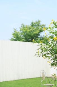無人の白い板壁の庭の写真素材 [FYI02030323]