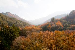 新道峠の写真素材 [FYI02030445]
