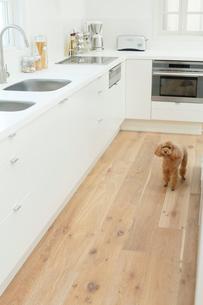 犬とキッチンの合成向け背景素材の写真素材 [FYI02030933]