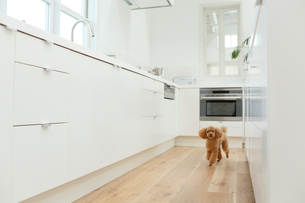 犬とキッチンの合成向け背景素材の写真素材 [FYI02031286]