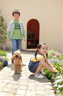 フラワーガーデンで遊ぶ男の子と女の子と犬の写真素材 [FYI02031295]