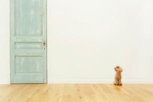犬とリビングルームの合成向け背景素材の写真素材 [FYI02031411]
