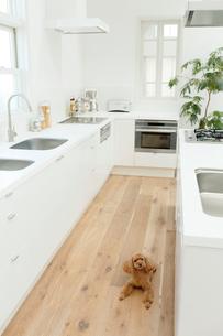 犬とキッチンの合成向け背景素材の写真素材 [FYI02031423]