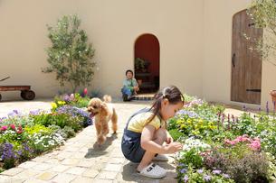 フラワーガーデンで遊ぶ男の子と女の子と犬の写真素材 [FYI02031490]