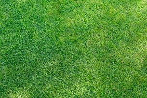 合成向け背景素材の芝生の写真素材 [FYI02031537]