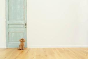 犬とリビングルームの合成向け背景素材の写真素材 [FYI02031669]
