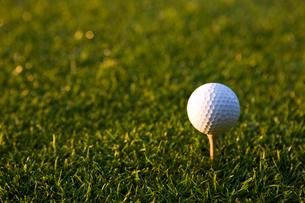 ティーアップされたゴルフボールの写真素材 [FYI02032582]