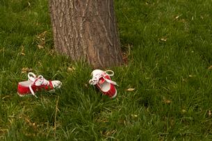 木の下に落ちた子供の靴の写真素材 [FYI02032769]