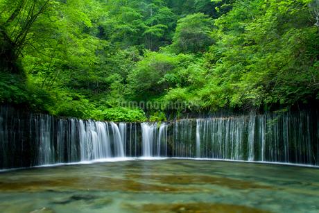 白糸の滝の写真素材 [FYI02034246]