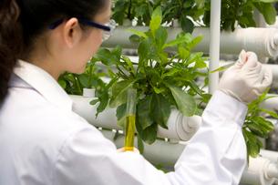植物の観察をする研究者の写真素材 [FYI02036018]