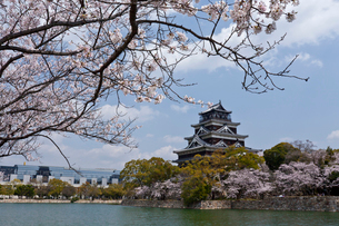 広島城と桜の花の写真素材 [FYI02037672]