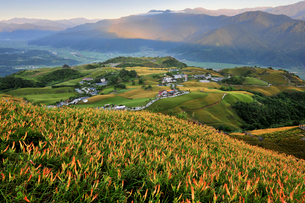 六十石山に咲く金針花の写真素材 [FYI02042093]