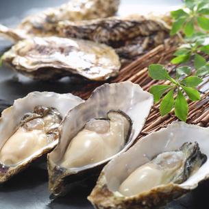 生牡蠣の写真素材 [FYI02042782]