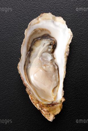 宮城産牡蠣の写真素材 [FYI02042801]