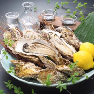 生牡蠣の写真素材 [FYI02043140]