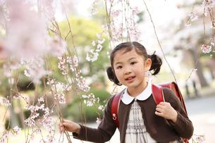 桜に触れる新入学の女の子の写真素材 [FYI02043377]