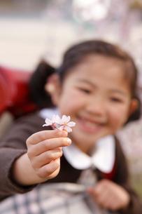 桜の花を持つ新入学の女の子の写真素材 [FYI02043666]