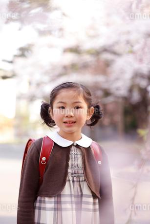 新入学の女の子と桜の写真素材 [FYI02043845]