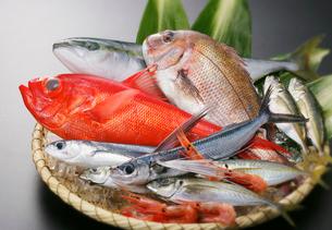 魚介類集合 キンメダイ他の写真素材 [FYI02043877]