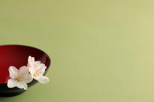 杯と桜の花の写真素材 [FYI02043890]