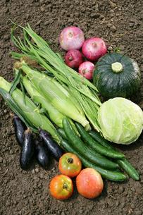 収穫イメージ 土の上の野菜集合の写真素材 [FYI02044164]