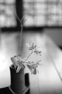 花器に生けた花の写真素材 [FYI02044696]