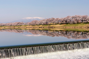 白石川堤一目千本桜の写真素材 [FYI02045335]