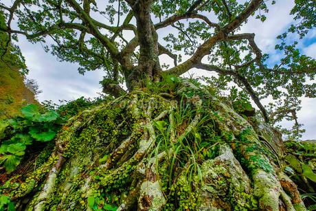 マングローブ原生林の写真素材 [FYI02046209]