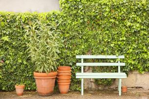 植木鉢とベンチの写真素材 [FYI02046923]