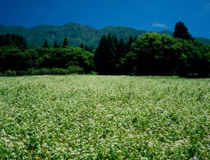 そば畑 山形県の写真素材 [FYI02047138]
