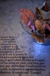 ガラス器に入った枯れ葉の写真素材 [FYI02047369]