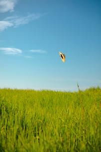草原と青空と風に飛ばされた麦わら帽子の写真素材 [FYI02047592]