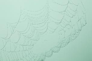 水滴が付いたクモの巣の写真素材 [FYI02047606]