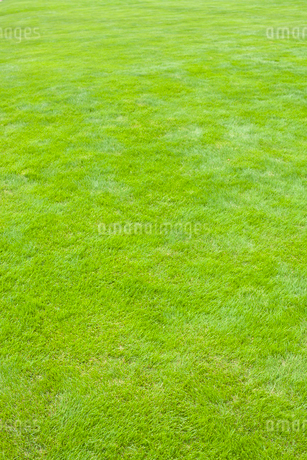 芝生の写真素材 [FYI02047612]
