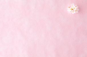 和紙と桜の写真素材 [FYI02047818]