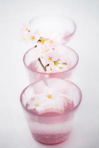 桜と日本酒の写真素材 [FYI02047910]