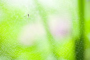 水滴が付いたクモの巣とクモの写真素材 [FYI02048098]