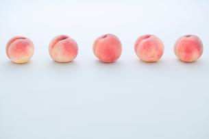 一列に並んだ白桃の写真素材 [FYI02048201]
