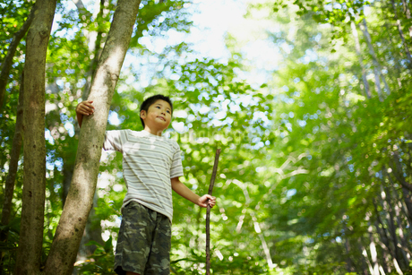木の枝を持つ男の子の写真素材 [FYI02048485]