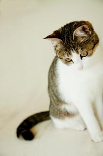 ネコの写真素材 [FYI02048494]