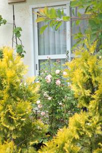 花咲く新緑の庭の写真素材 [FYI02048516]